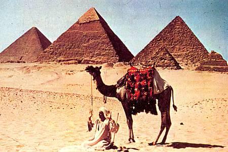 Погонщик верблюда