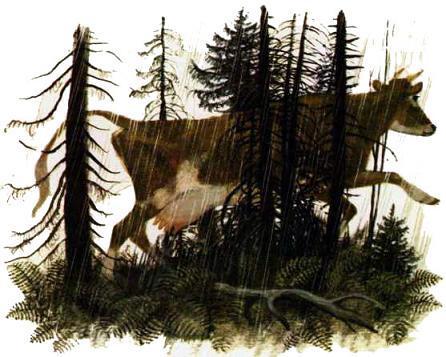 корова бежит через лес
