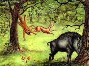 лисица и дикая свинья