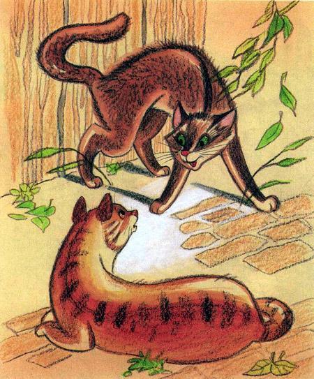 коты бой