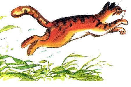 кот убегает