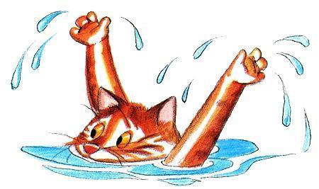 кошка в воде
