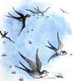 ласточки, птицы, небо