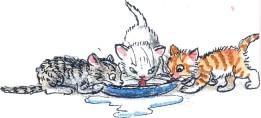 котята, молоко, едят