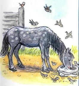 лошадь, ест, овес