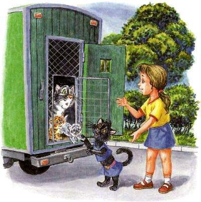 котят выпускают из клеток