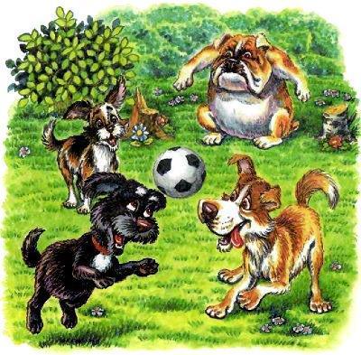 собачки играют в футбол