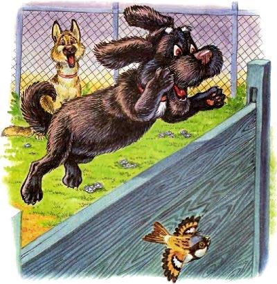 пёс Тузик перепрыгивает берет барьер