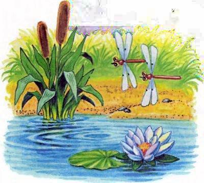 озеро камыш стрекозы летают