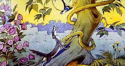 мангуст Рикки-Тикки-Тави в саду