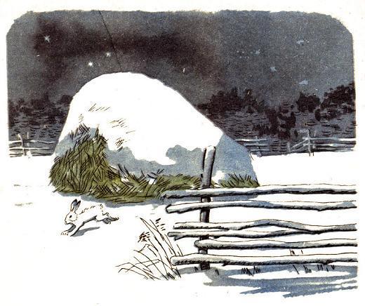 Русак белый заяц у стога снега зимой