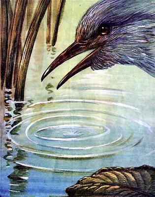 птица охотится у воды