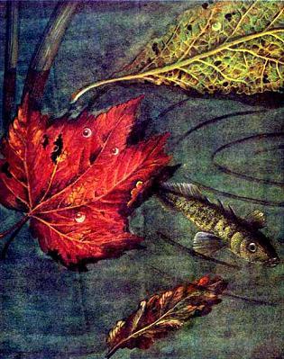 осенний лист на воде рыба