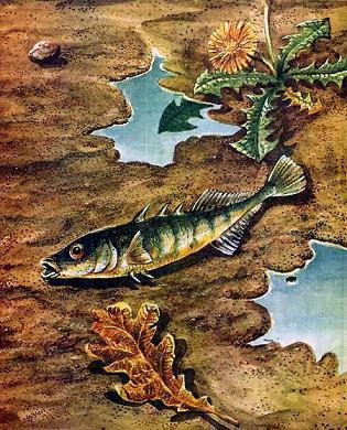 рыба без воды