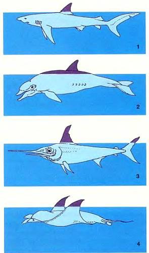 По форме и количеству торчащих из воды плавников можно определить, какая плывет рыба
