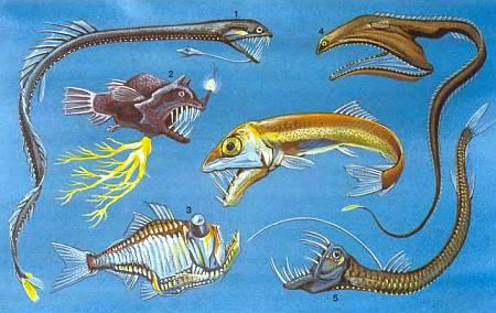 В морских глубинах обитают чудовища