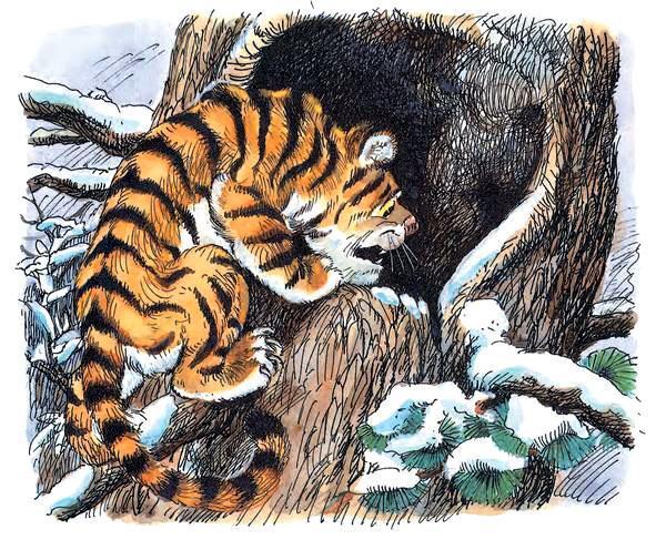 Заглянул тигрёнок в эту берлогу