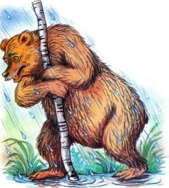 медведь под дождем