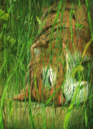 Тигр! Тигр! | Изображение - 13