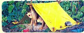 ежи сделали палатку от дождя